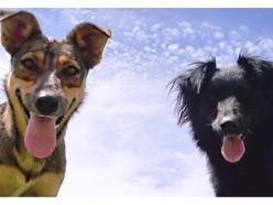 ביטוח לבעלי חיים