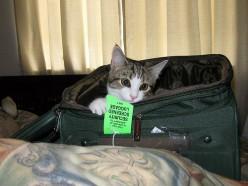 תנאי חברות תעופה בהטסת בעלי חיים